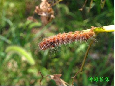 春季杨树虫害防治措施
