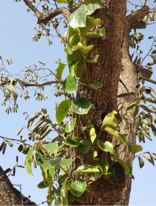 ppt素材 树木根系